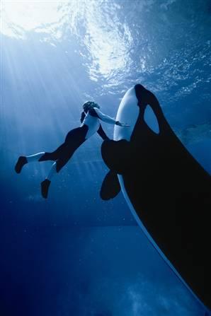 Аквариум Sea World, Флорида, США. В этом аквариуме используются насосы Fybroc для перекачки воды