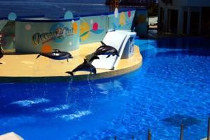 Океанический парк (Ocean Park) - самый большой тематический парк в Юго-Восточной Азии, расположен в Гонконге. В этом аквапарке также используются насосы компании Fybroc для перекачки соленой воды